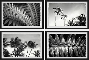 Bay Isle Home 'Palm Trees Quadriptych' 4 Piece Framed Photographic Print Set