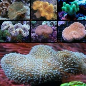 X2 ASSORTED TOADSTOOL PACKAGE - MED 3-4