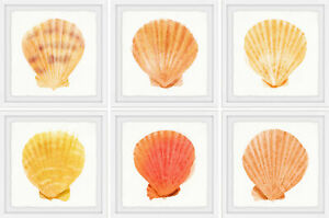 Highland Dunes 'Sea Shells Wonder II' 6 Piece Framed Acrylic Painting Print Set