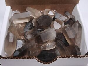 Smoky Quartz Points Collection 1 2 Lb Natural Clear Brown Crystals Brazil $21.95