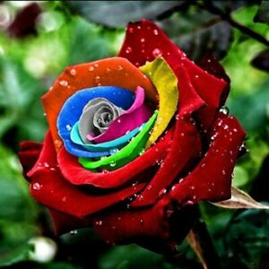 JN_ 200 Seeds Multi-color Rainbow Rose Flower Seeds Garden Plants Seeds Flower