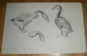 Original Pencil Drawing of a Goose Geese by Helena Krause Beacham $14.99