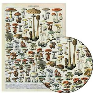 Vintage French Mushroom Chart BOTANICAL MAP Poster Educational Art Print twn
