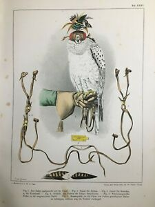 Birds of Prey 60 Lithographs Book 1876 Germany and Middle Europe $325.00
