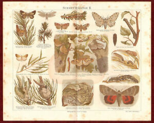 Original Chromolithography Butterfly German Encyclopedia Illustrated 1890s $23.40
