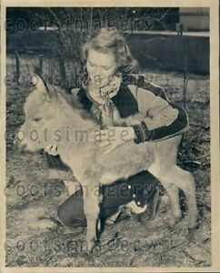 1951 Wire Photo Woman With Baby Donkey Brookfield Zoo Chicago