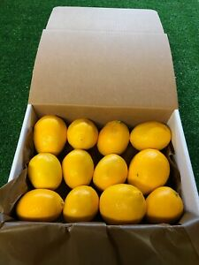 Med Box Organic California Meyer Lemons