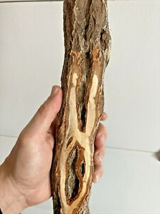 Diamond Willow Cane LOADED 💎 STRONG Wood CARVING blank Walking Stick Burly $29.95