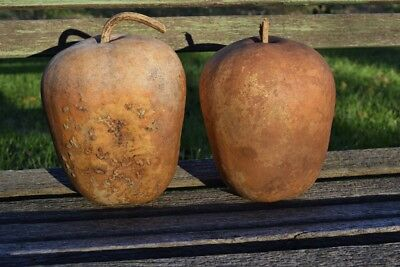 Two Dried Apple Gourds for crafts