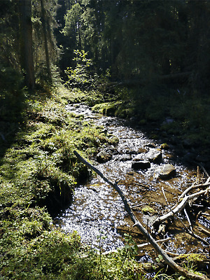 GOLD MINE Historic Gold Creek MT Pikes Gold 4 20 Acre Gold Mining Claim