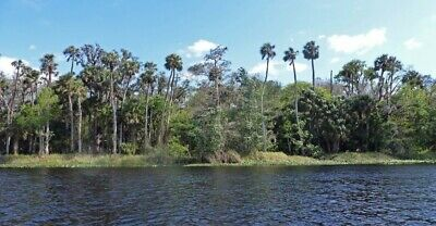 4-50 Acres of Vacant Land DIRECTLY on the St- Johns River Near Palatka Florida
