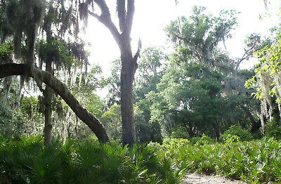 Escape to a Secluded 94 Acre Private Island in FL  LEASE GILCHRIST ISLAND FL
