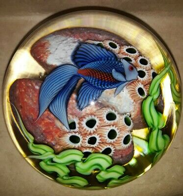Large ORIENT - FLUME Blue Beta FISH ART Glass PAPERWEIGHTSecond O - F-