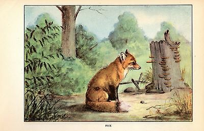 1926 Vintage ANIMALS FOX GORGEOUS COLOR Art Print Plate Lithograph