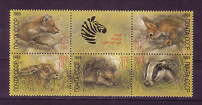 Russia 1989- Zoo Relief Fund- Scott  B156a- Block of 5 - label- MNH VF