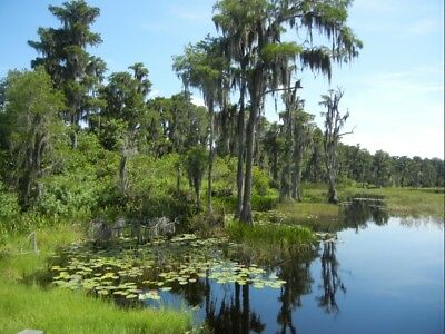 8 Acres of Lakefront Property in Central Florida- 12 Hour From Disney - Orlando