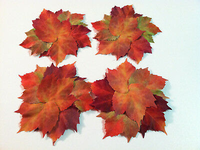 NWT Set of 4 Pier 1 Autumn Fall Leaf Coasters Thanksgiving Table Dinner Decor