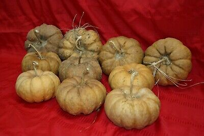 CHEESE GOURDS A GROUP OF 10
