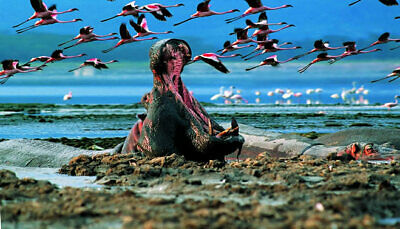 Day Trip to Lake Nakuru National Park  Solo - others
