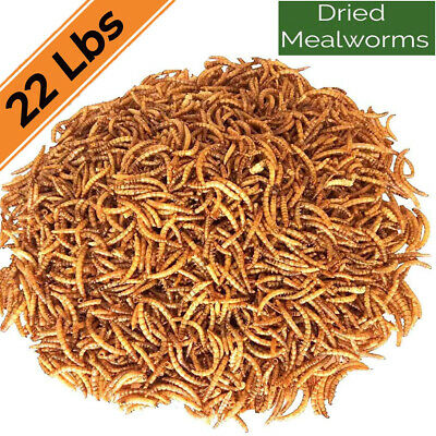 22lbs Dried Mealworms for chickens - Chicken Treats Duck Feed Organic Meal Worms
