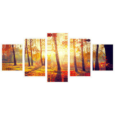 No Frame Landscape Photo Canvas Poster Print Forest in Sun Wall Art Home Decor