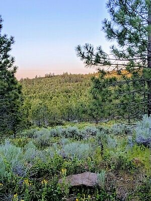 Beautiful Northern California Forest Land Near Alturas CA No Reserve