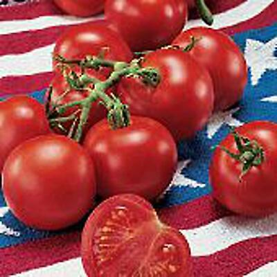 Fourth of July Tomato Seeds 25 Seed Packet