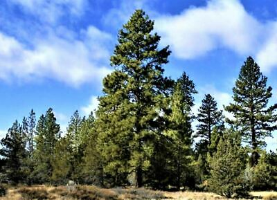 California Pines  Large 1 Acre Lot