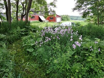 5 Acres - with Large Barn