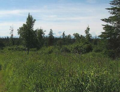 199 DOWN START BID 17- ACRES WITH MOUNTAIN VIEWS - POND NEAR HOMER- NO QUALIFY