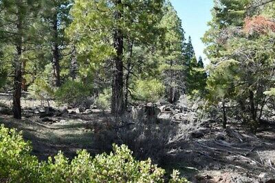 Wholesale 5 Lots in Modoc County - California Pines Unit 5 - NO RESERVE