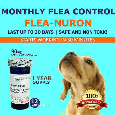 1 Year Supply MONTHLY Flea Control for DOGS 11-20 Lbs- 90 Mg PB 12 Capsules
