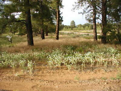 2-5 BEAUTIFUL ACRES IN CIBOLA COUNTY NEW MEXICO NEAR EL MORRO NATIONAL MONUMENT