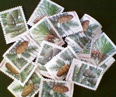 250- Holiday Evergreens Stamps Forever 44 cent Used Off Paper