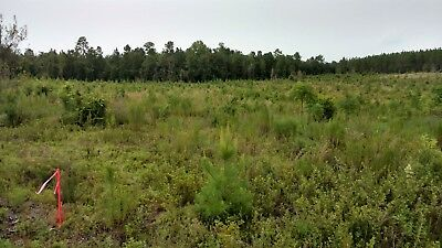15 acres Investment Opportunity Georgia Summertown Owner Financing