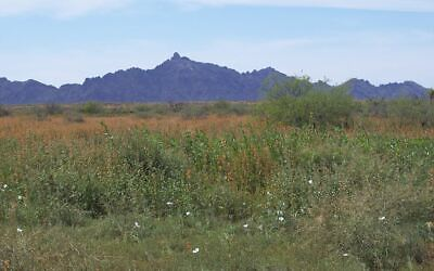40 ACRES SOUTHERN ARIZONA  JUST NORTH OF INTERSTATE 8