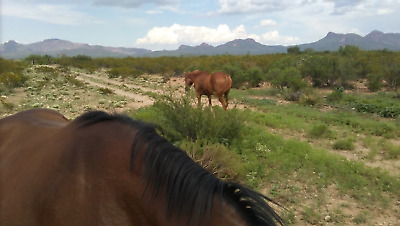 Land For Sale  Arizona   39-99 a Month with MOUNTAIN VIEWS Owner Financed