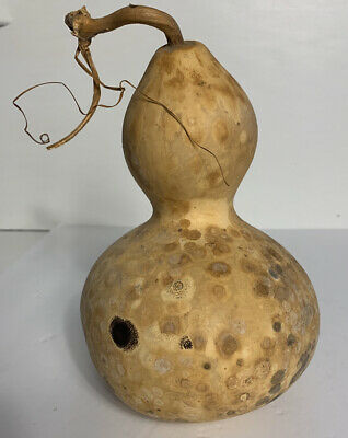 9 ORGANIC Dried Bottle Gourd Clean and Ready for Birdhouse or Crafting