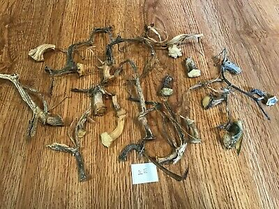 Pumpkin Stems 20 Very Small Unique Naturally Dried High Quality 1-5