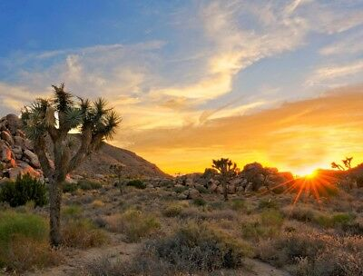 CALIFORNIA 5 ACRE DREAM HOME LOT RANCH LAND PROPERTY DESERT OASIS MOUNTAIN VIEW