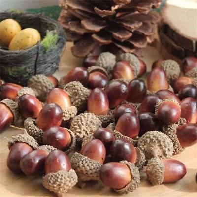 10x Assorted Natural Acorns With Caps Fall Decor Thanksgiving Craft Supplies