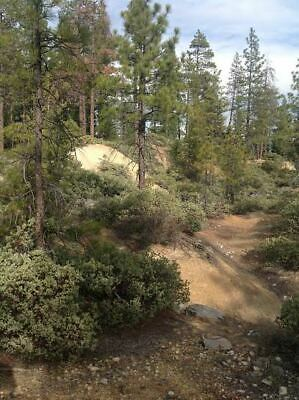 California Motherlode Gold Mining Claims 40 Acres Rich Old Channel No Reserve