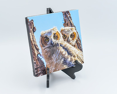 Great Horned Owl Owlets Wall Decor 8x8 Canvas Print Photo Colorful