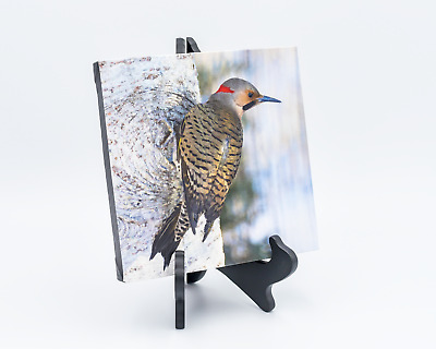 Northern Flicker Wall Decor 8x8 Canvas Print Photo Colorful