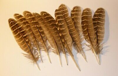 10 NATURAL pheasant feathers 3-5- quick ship from CA - Free shipping