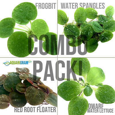 Floating Plant Combo Frogbit Red Root Floater Water Lettuce Water Spangles
