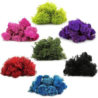 Preserved Reindeer Moss for Terrariums Fairy Gardens Arts - Crafts - 7 Colors
