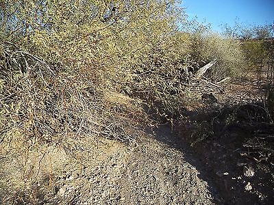Gold Pan 1 - 20 Acre Placer Claim in the Belmont Mountains