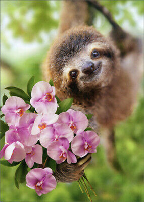 Avanti Sloth Holding Flowers Cute Mothers Day Card
