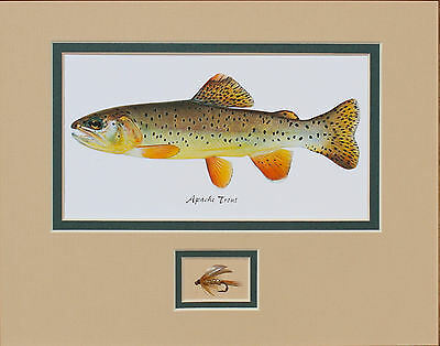 Apache - Gila Trout Print by Joseph Tomelleri with fly